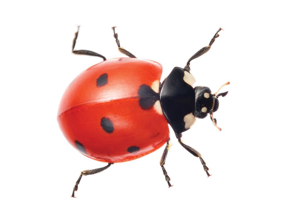 Картинках, жуки картинки с надписями