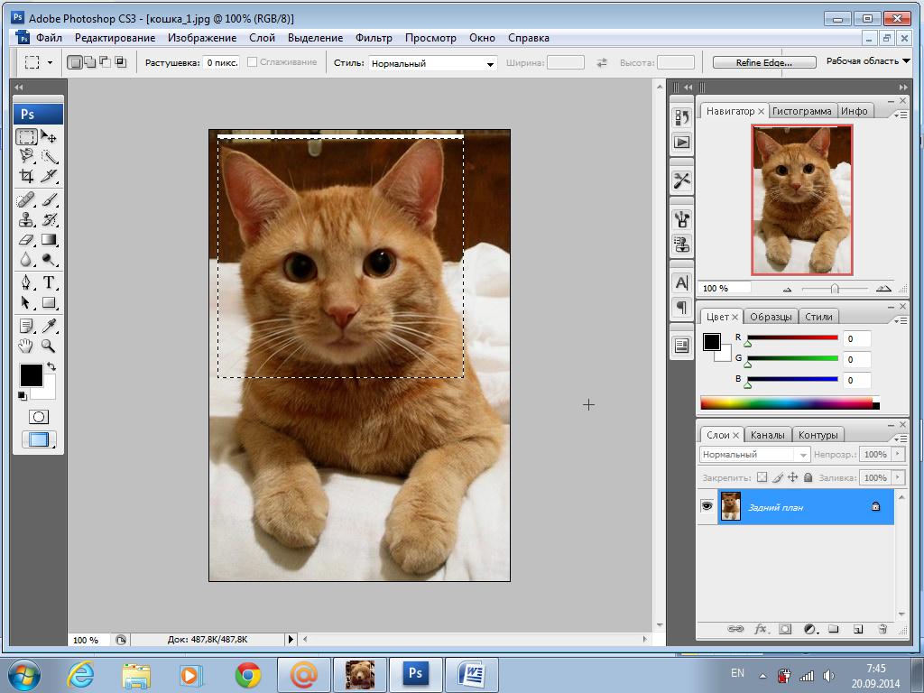 возможность векторный редактор фотографий эту ёлку